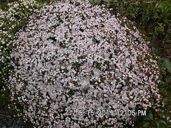 Spring-Trip-3-2011-149.jpg
