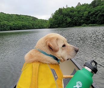 hydroflask-rez-deer-canoe.jpg
