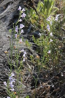 Wildflowers-1.jpg