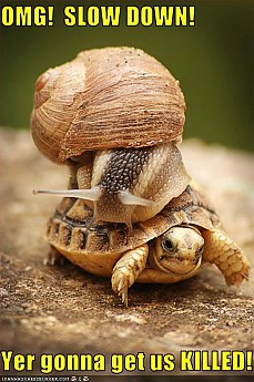turtle-snail.jpg