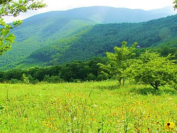RH---Overmountain-flowers.jpg