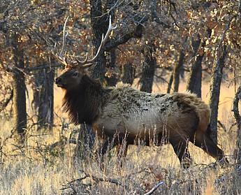 5-x-5-Elk.jpg