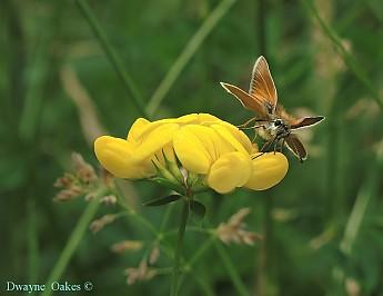 g-nectar.jpg
