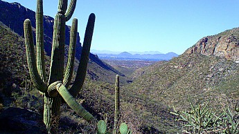 44-Saguaro-and-Staghorn-Cacti-Tucson-and