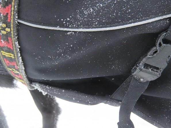 tubbs53-15jan-cat-22-SB-23-dog-coat.jpg