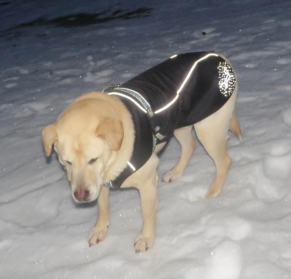 dog-coat-at-night.jpg