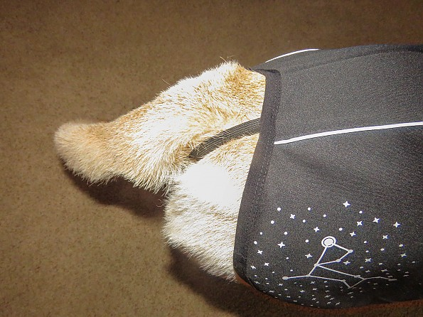 dogcoat-8.jpg