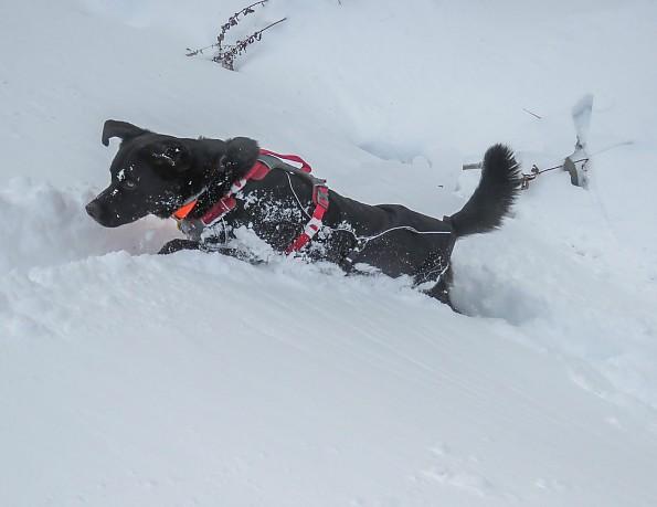 snowdog-12.jpg