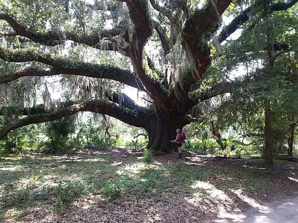 bethany-big-tree.jpg