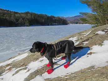 winter-hike7-3-dogcoat.jpg