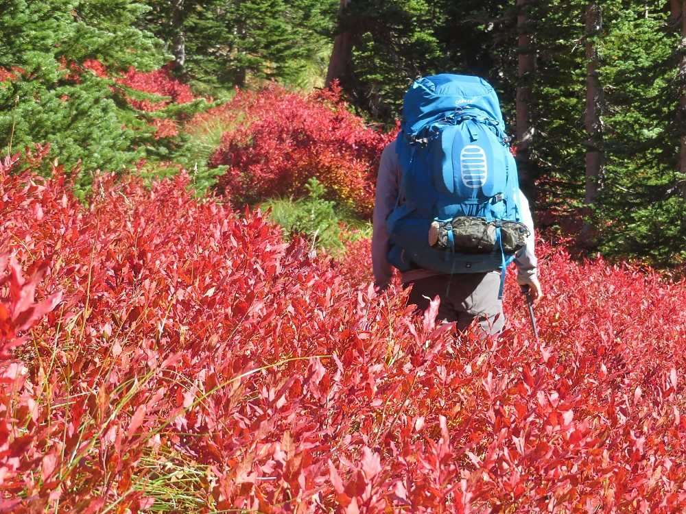 photo: Osprey Aether Plus 85 expedition pack (70l+)
