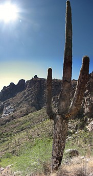 Two-armed-Saguaro-with-Thimble-Peak.jpg