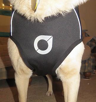 dogcoat-3.jpg