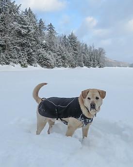 tubbs62-25jan-grrsp-19-dog-coat-no-harne