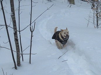 tubbs62-25jan-grrsp-22-dog-coat-running.