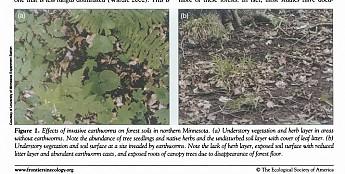 Earthworm-invasion_Page_3.jpg
