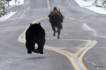 Bear10.jpg