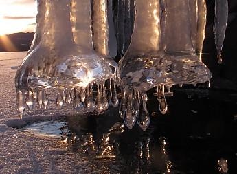 Elephant-s-feet-closeup.jpg