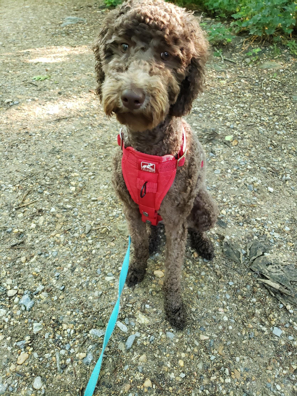 photo: Kurgo Enhanced Strength Tru-Fit Dog Car Harness dog harness