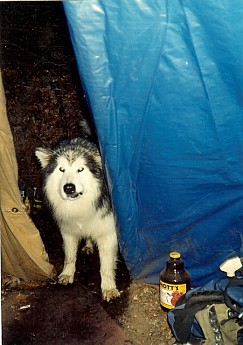 Spirit-Dog-visits-the-Tipi.jpg
