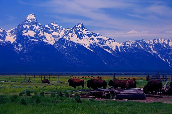 Grand-Tetons-and-the-Antelope-Flats-Buff