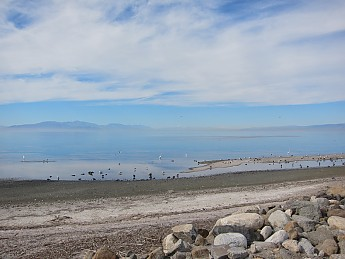 Salton-Sea-bird-life.jpg