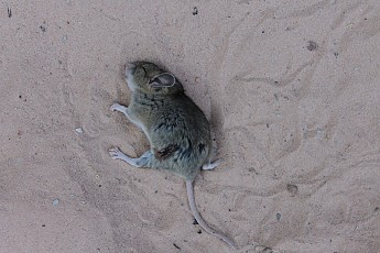 Mouse-along-Red-Hollow.jpg