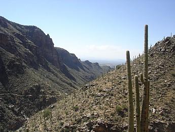 Saguaro-Cactus-and-the-Bear-Canyon-Trail