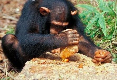 Monkey-Grinder.png