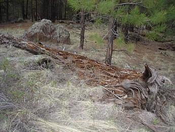 Camps-at-Shultz-Creek-Canyon-TH-036.jpg