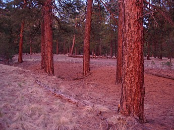Camps-at-Shultz-Creek-Canyon-TH-109.jpg