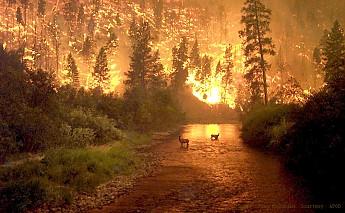 fires_mccolgan_960.jpg