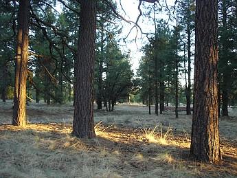 Camps-at-Shultz-Creek-Canyon-TH-210.jpg