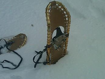 snowshoes-1.jpg