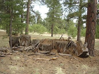 Camps-at-Shultz-Creek-Canyon-TH-235.jpg