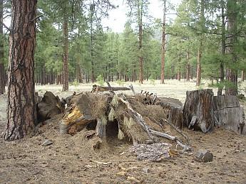 Camps-at-Shultz-Creek-Canyon-TH-237.jpg