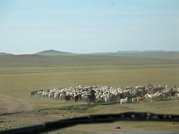 11-Sheep521.jpg