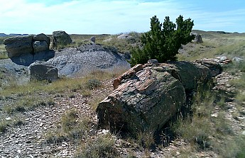 Petrified-log-erodes-from-the-ancient-la