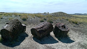 Petrified-log-sections-6-PFNP-AZ.jpg