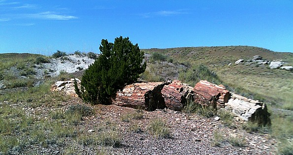 Petrified-log-sections-12-PFNP-AZ.jpg