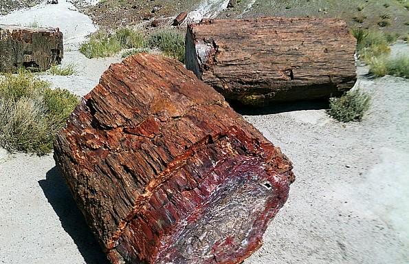 Petrified-log-sections-PFNP-AZ.jpg