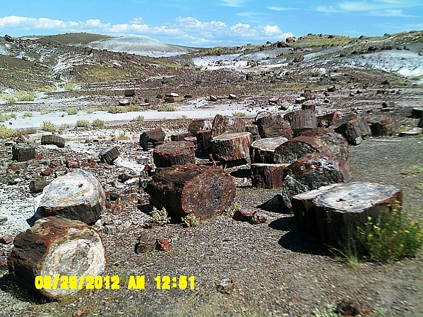 Petrified-log-sections-2-PFNP-AZ.jpg