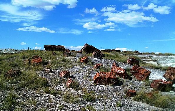 Petrified-log-sections-9-PFNP-AZ.jpg