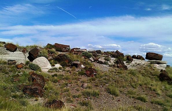 Petrified-log-sections-10-PFNP-AZ.jpg