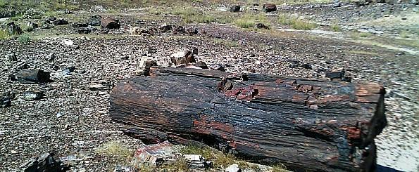 Petrified-log-section-e-PFNP-AZ.jpg