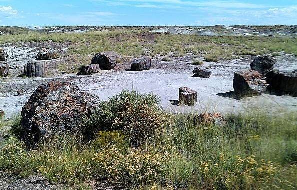 Petrified-log-sections-14-PFNP-AZ.jpg