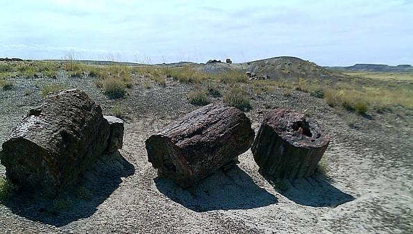 Petrified-log-sections-6-PFNP-AZ.jpg