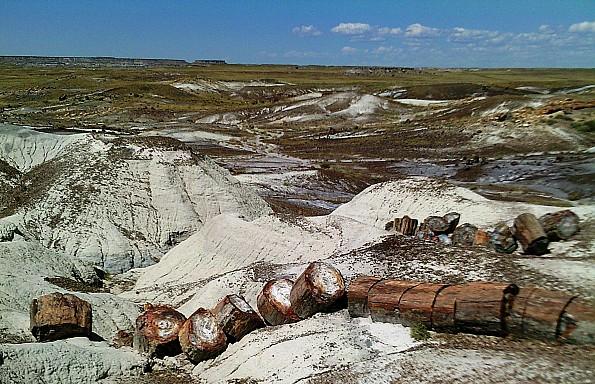 Petrified-log-sections-5-PFNP-AZ.jpg