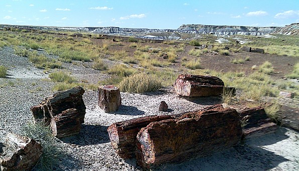 Petrified-log-sections-8-PFNP-AZ.jpg