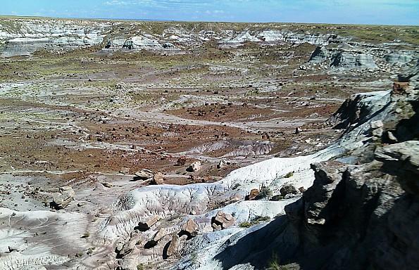 Petrified-log-sections-11-PFNP-AZ.jpg